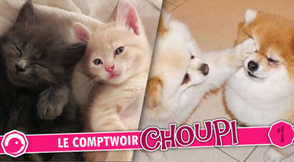 Image de couverture de l'article : Le Comptwoir Choupi #1